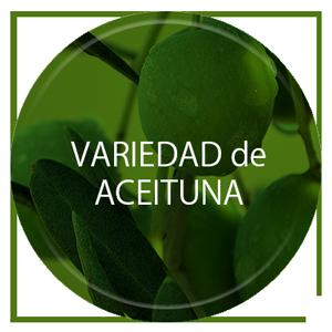 Aceite de Oliva aromático